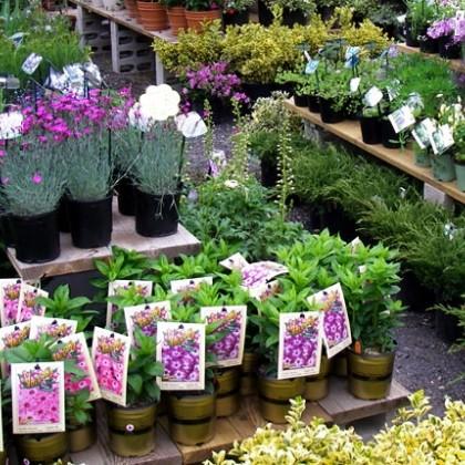 landscape soil preparation
